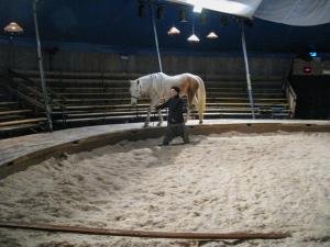 cirque_equestre_pagnozoo_toulouse_la_grainerie